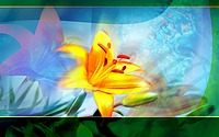 Digital Flower Manipulations and Backgrounds25 pics